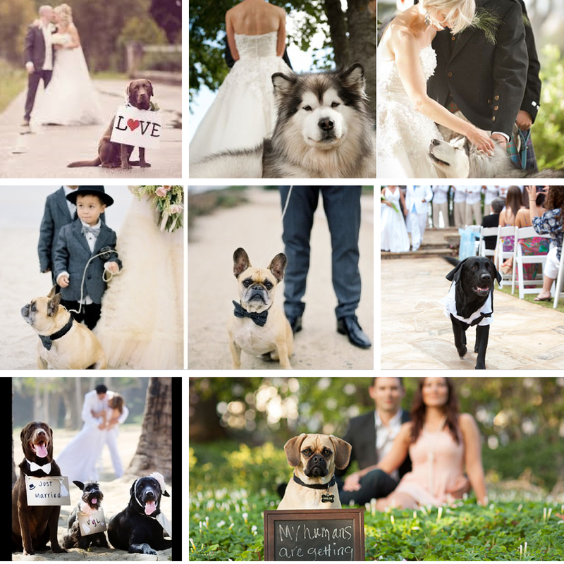 BI_wedding_pets