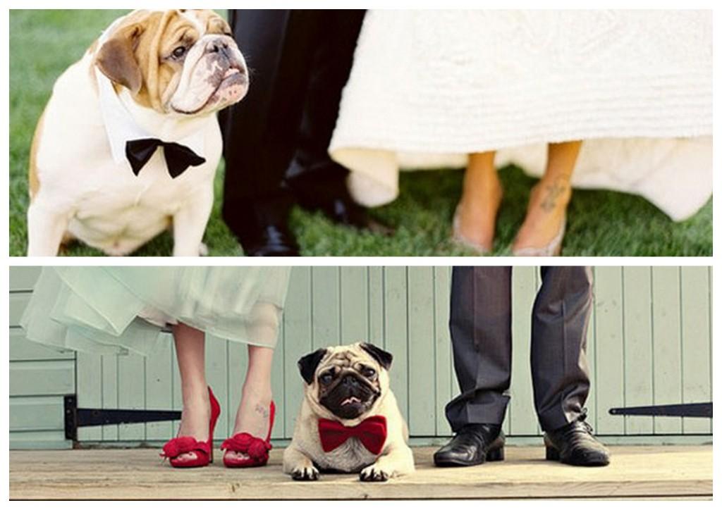 pets-weddings